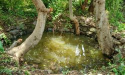 Well_with_Lendiya_tree_inside_SS_Aug16